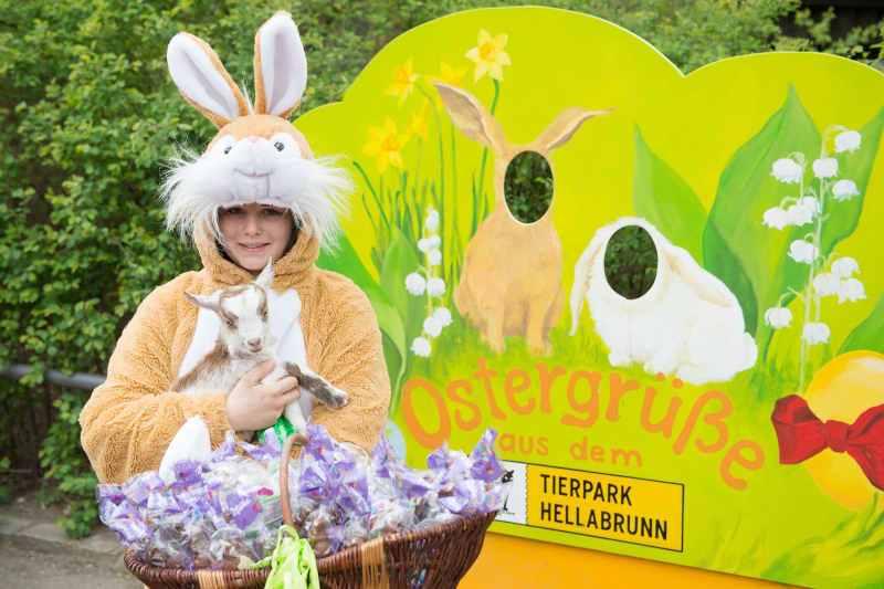Osterhase mit Girgentanaziegen-Baby Orchidee_Hellabrunn_2014 (6)