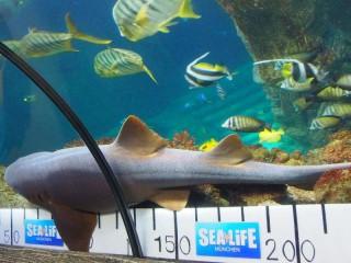 Sealife Aquarium München