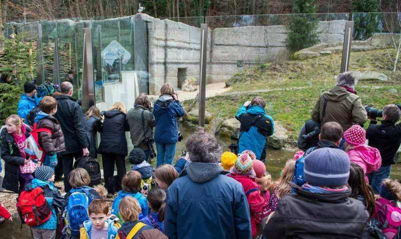 Besucher bei den Eisbärenbabys_Hellabrunn_2014