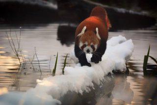 Quelle: Tierpark Hellabrunn/Bihler Photography