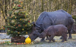 Quelle:Fotos: Tierpark Hellabrunn/Marc Müller