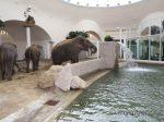Tierpark Hellabrunn: Feierliche Eröffnung des Elefantenhauses