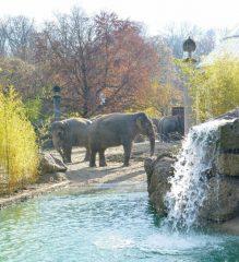 asiatischeelefanten_tierparkhellabrunn_2016-2