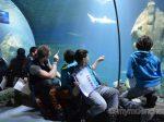 SEA LIFE München: Fischinventur 2017