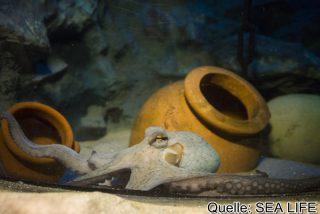SeaLife Oktopus Ausstellung, 23.02.17 im Olympiapark München ©Martin Hangen