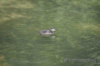 Tier im Wasser