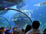 Inventur 2018 im SEA LIFE München! Fleißige Sechstklässler stellen sich der kniffligen Aufgabe, im SEA LIFE München Fische zu zählen. Im Gegensatz zu einem Supermarkt ist das im Großaquarium nicht so einfach: Wie findet man die Verstecke der Unterwasserbewohner? Wie zählt man besonders flinke Fische? Die Biologen zeigen Tipps und Tricks. SEA LIFE,München,Hai-Eier,Großaquarium,Meeresbewohner