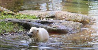 Eisbären-Baby Namen Quintana (8)