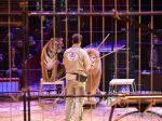 Kommentierte Öffentliche Löwen-Dressurproben im Circus Krone 2018