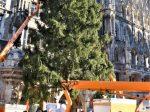 Ein Christbaum für München aus Farchant