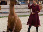 aus EQUILALAND wird CAVALLUNA PARK: Unter neuem Namen startet der Pferde-Erlebnis-Park