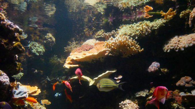 Sea Life Korallengarten
